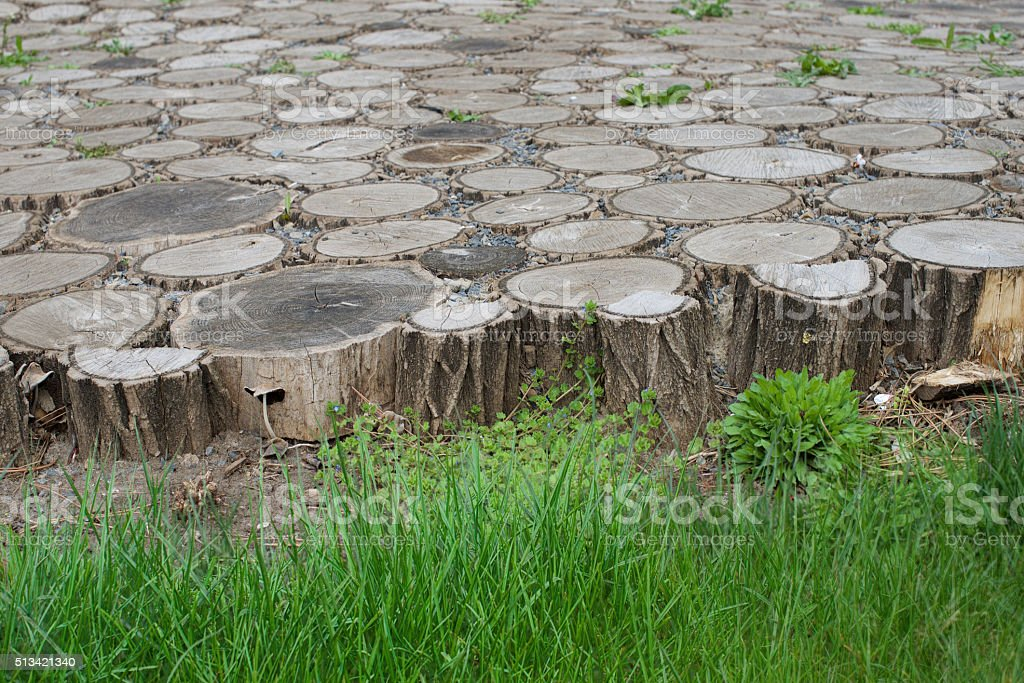 Cross-section wooden background on a background green grass stock photo