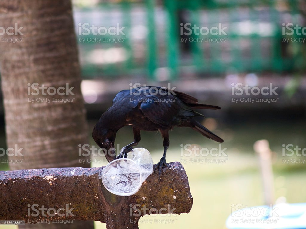 Crow and bottle stock photo