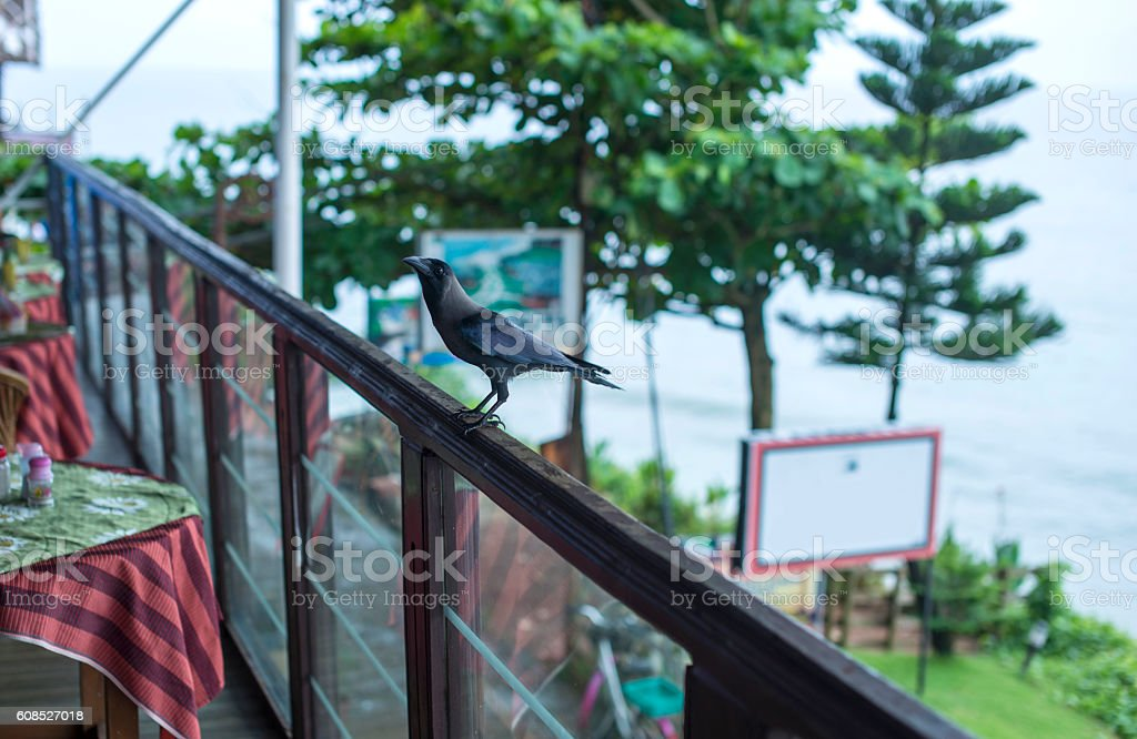 Crow at a local cafe on the cliff in Varkala stock photo