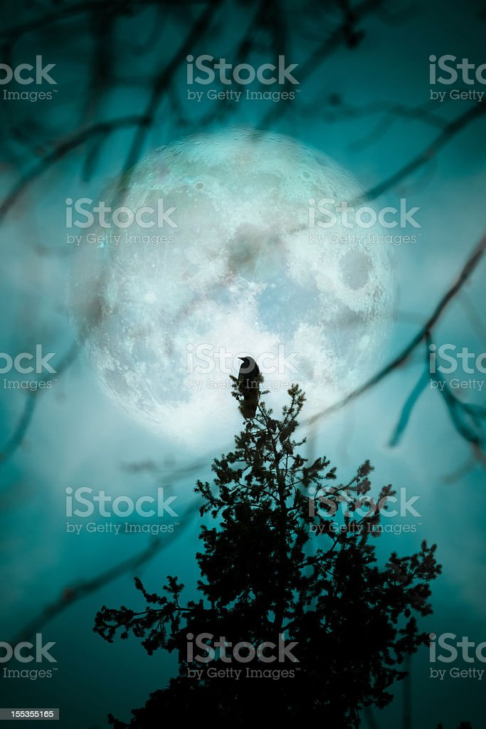 Crow At The Moon - Night Blue Teal Silhouette Trees stock photo