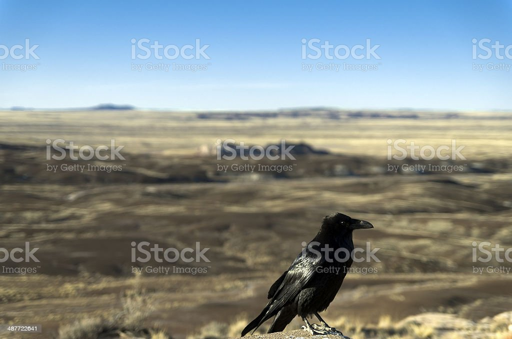 Crow at the Painted Desert at Petrified Forest National Park, Arizona royalty-free stock photo