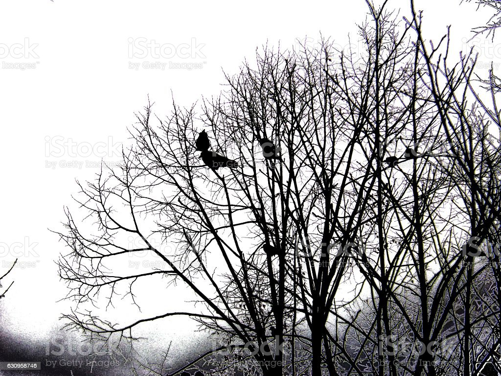 Crow couple on a leafless tree stock photo