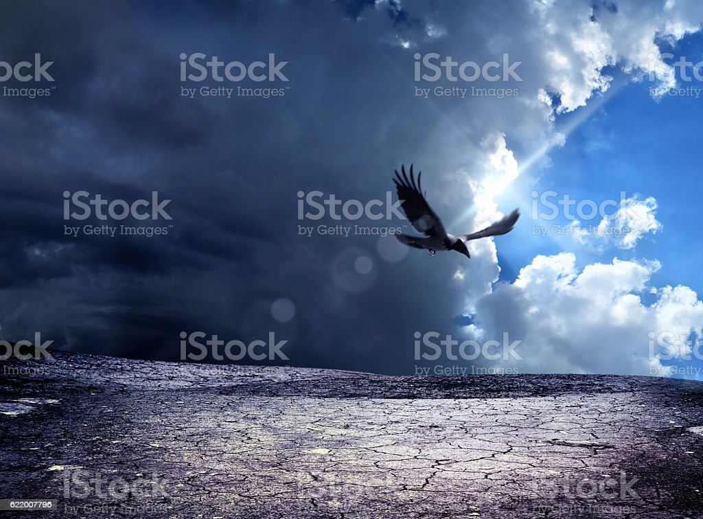 crow flying over dried landscape stock photo
