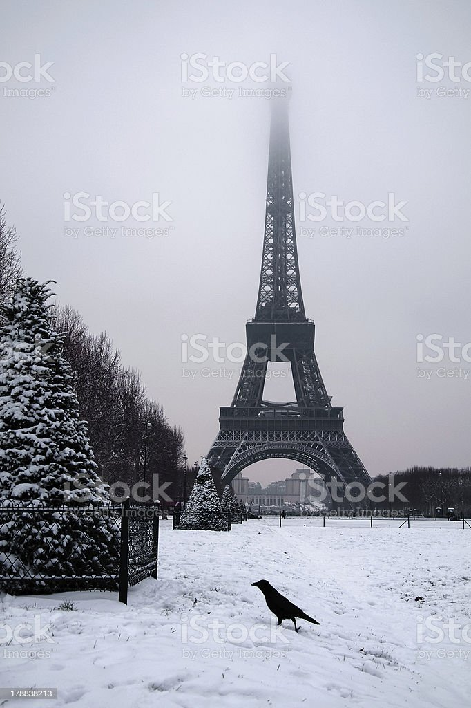 Crow in front of the Eiffel tower stock photo