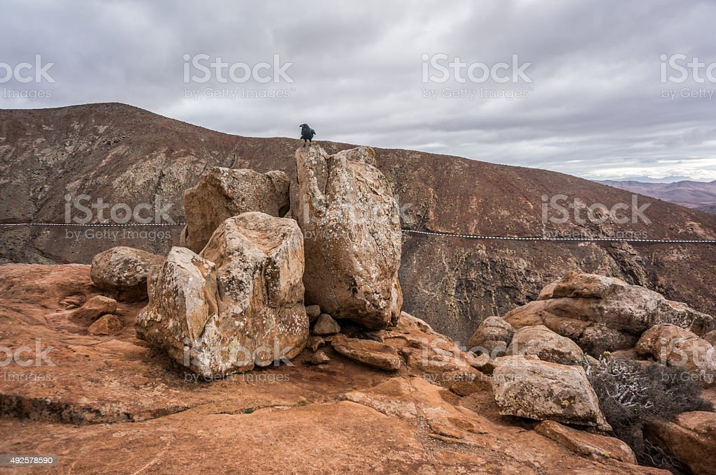 Crow on a rock stock photo