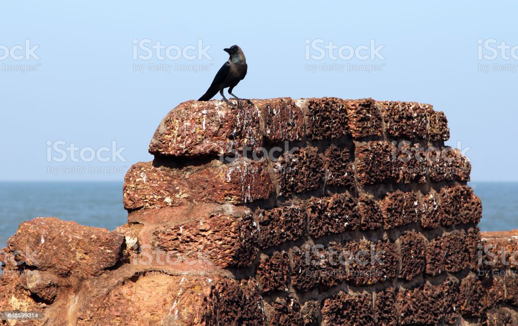 Crow on the ancient stone wall of Aguada Fort, Goa, India stock photo