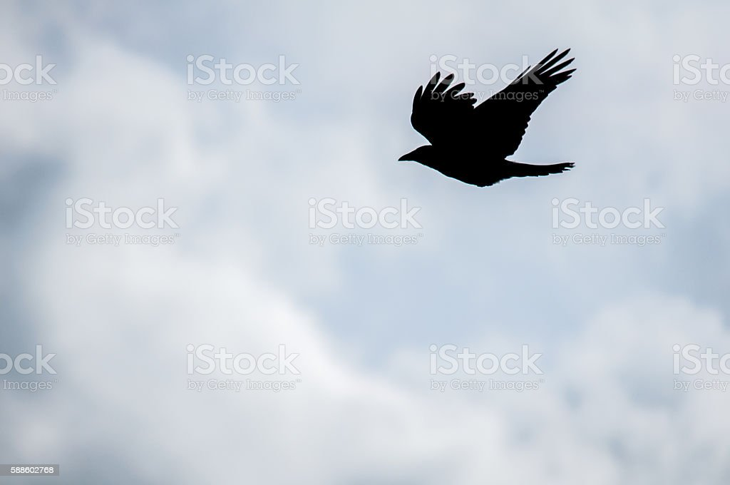 Crow silhouette against the sky stock photo