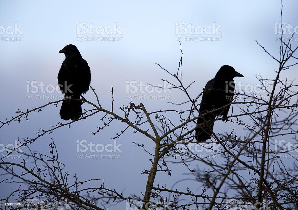 Crow silhouette royalty-free stock photo