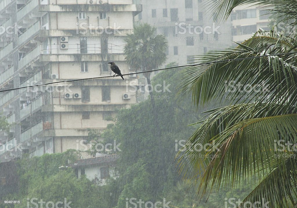 Crow silhoutte in the rain royalty-free stock photo