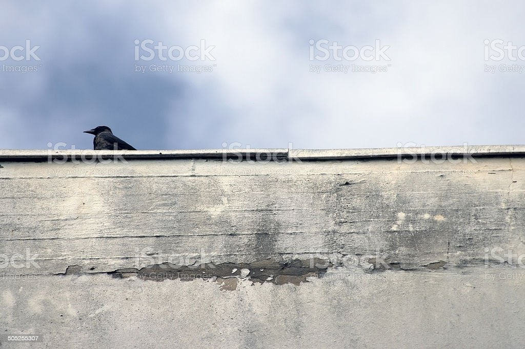 Crow standing on wall stock photo
