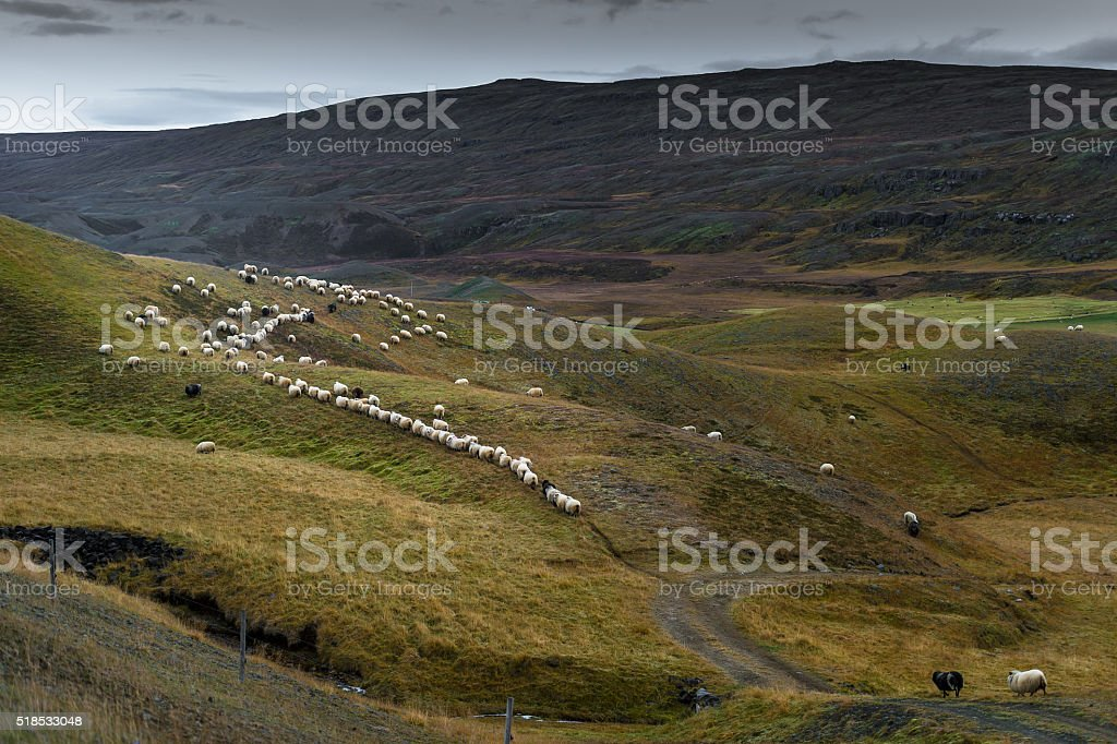 Crowd of sheep in greenery hill with mountain range background stock photo