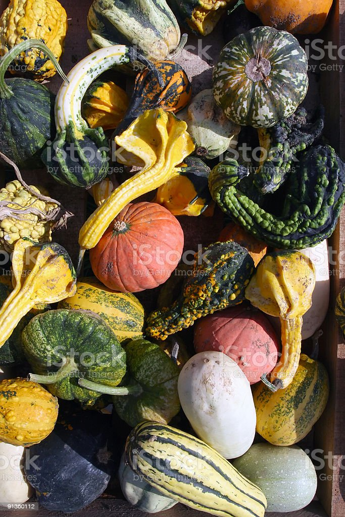 Crowded Pumpkins royalty-free stock photo