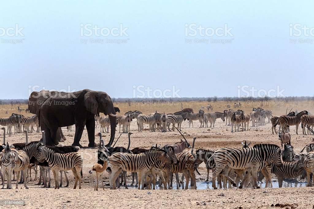 crowded waterhole with Elephants stock photo