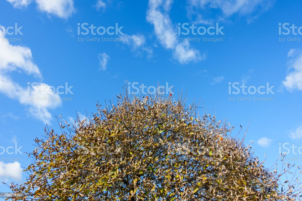 Crown of a Tree in Autumn stock photo