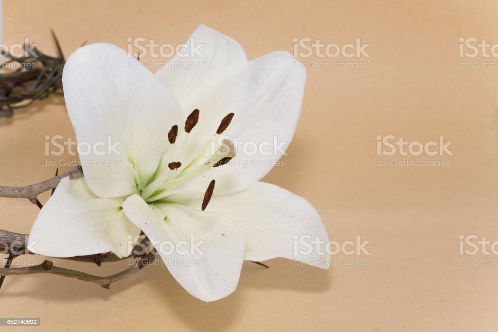 Crown of Thorns and Easter Lily stock photo