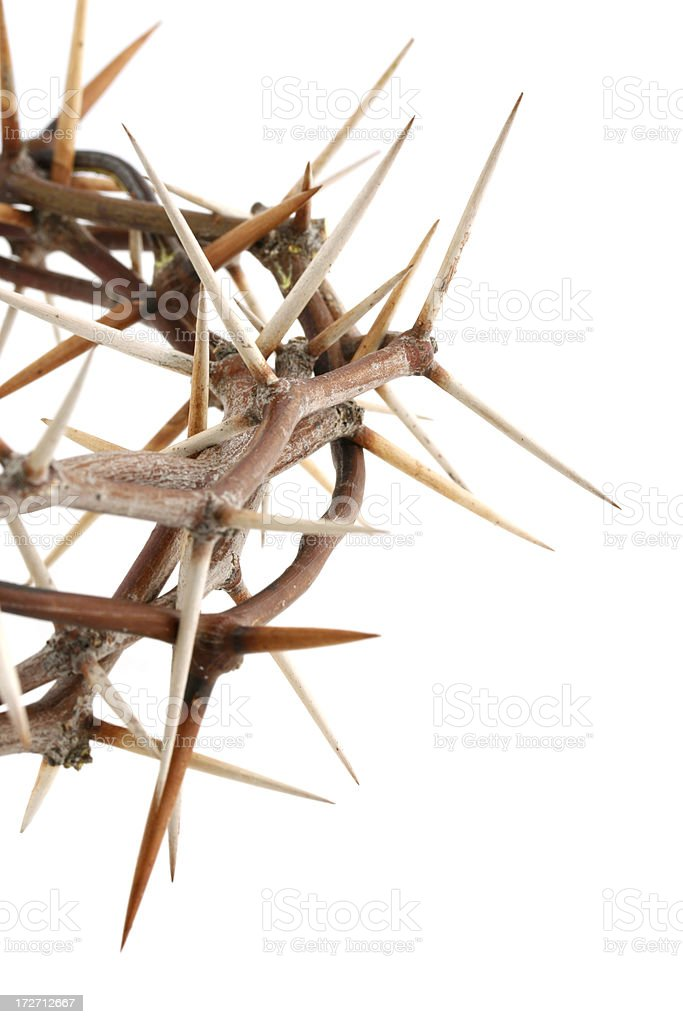 Crown of Thorns Detail royalty-free stock photo