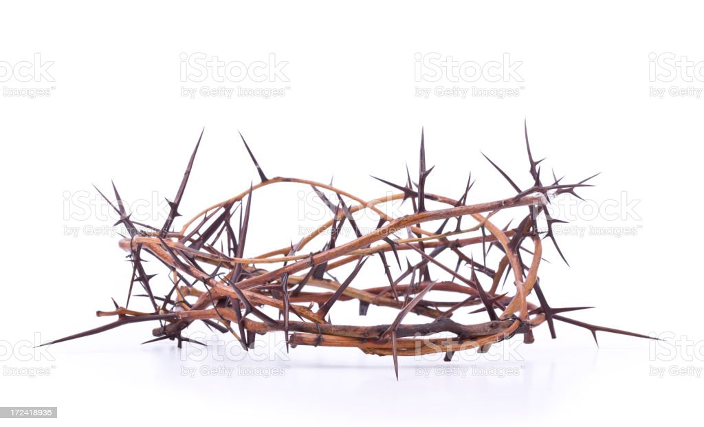 Crown of Thorns (XL) royalty-free stock photo