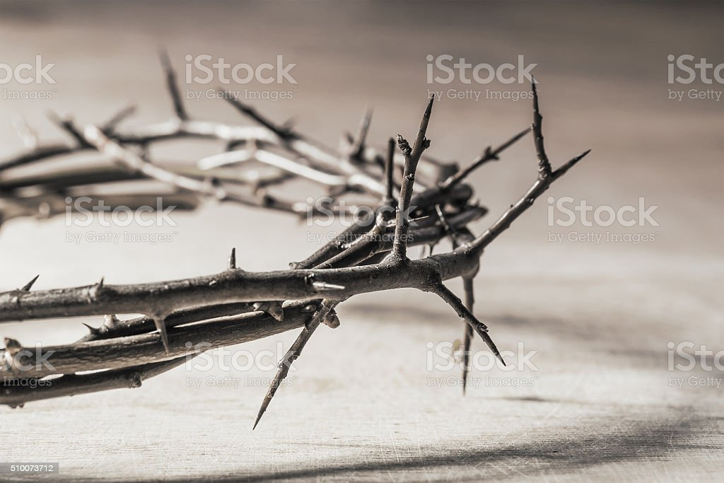 Crown of thorns. stock photo