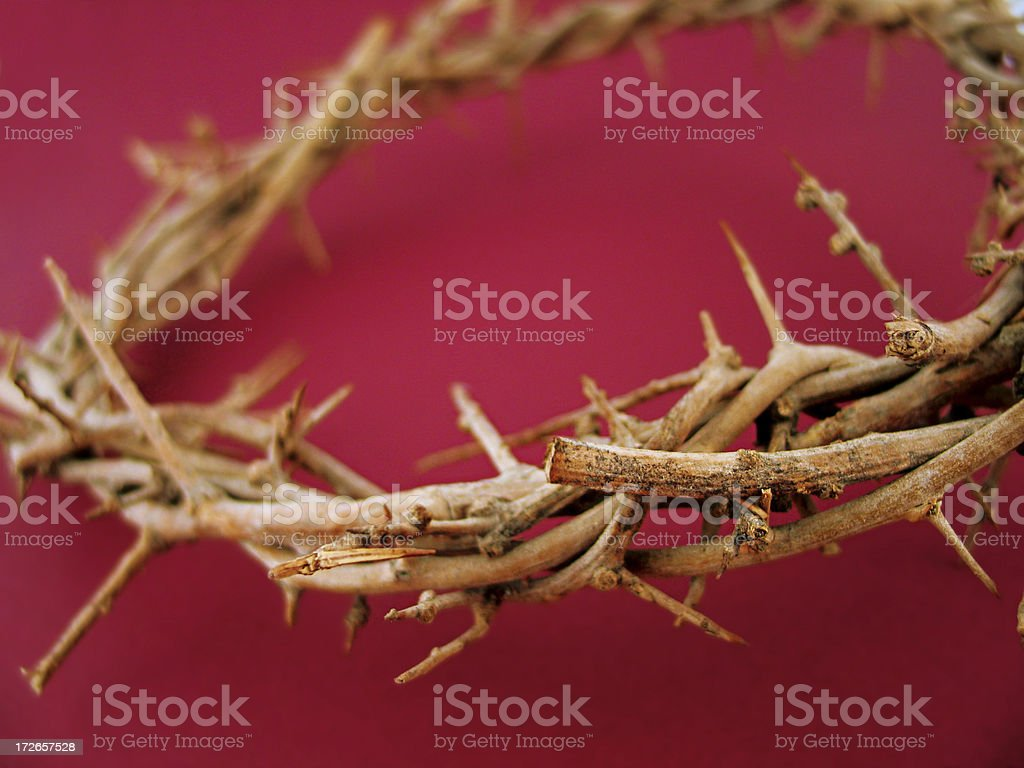 Crown of Thorns-Burgundy royalty-free stock photo