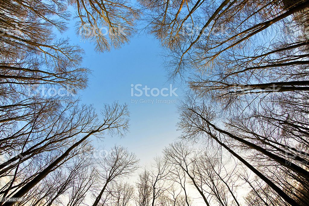 crown of trees with clear blue sky stock photo