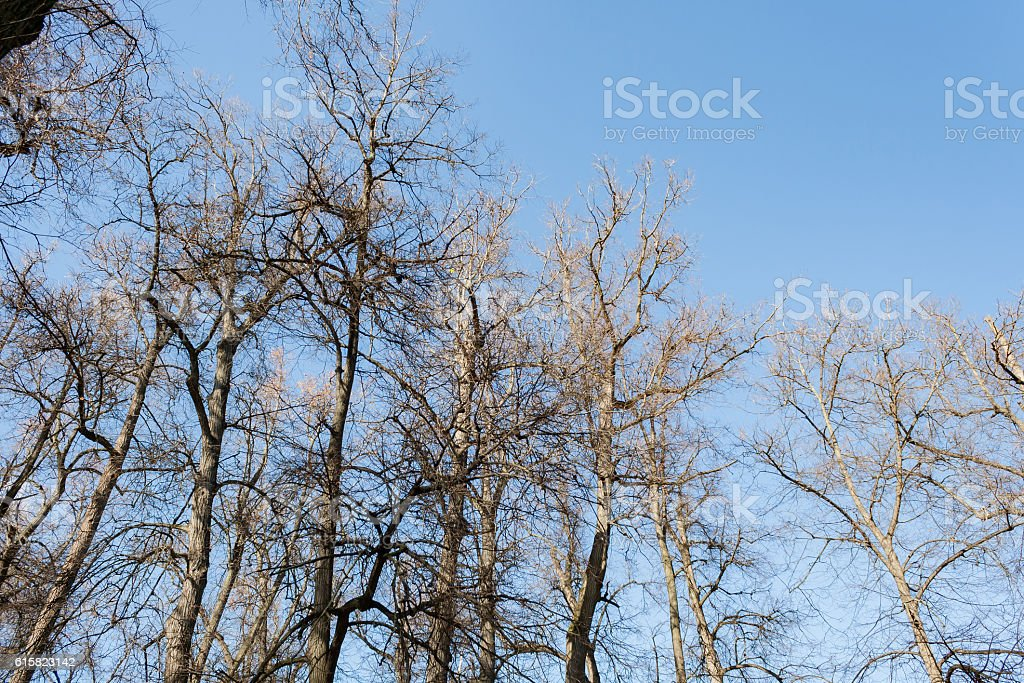 Crowns trees against the background of the blue sky stock photo