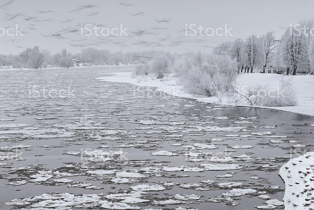 Crows and seagulls on a snowy river royalty-free stock photo