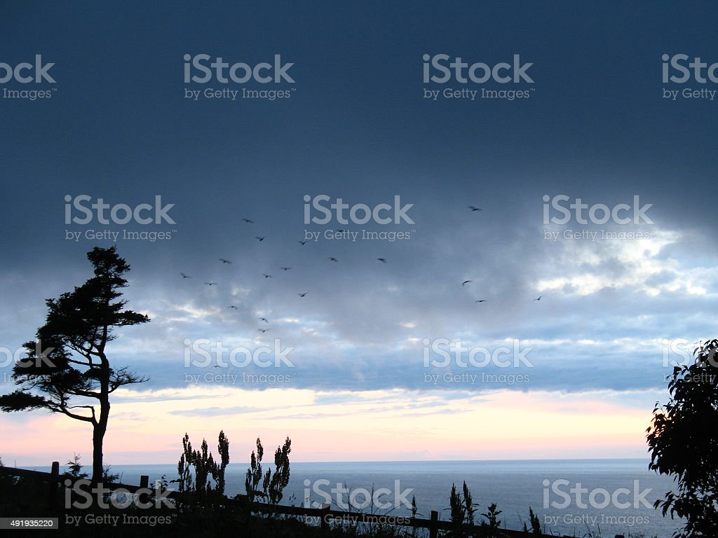 Crows Fly Over Ocean at Sunset. stock photo