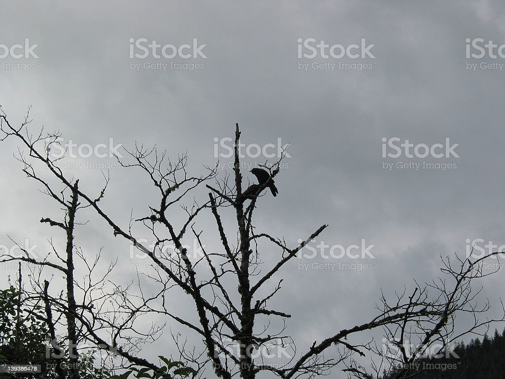 Crows in a Storm stock photo