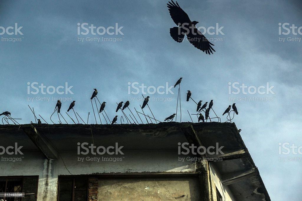 Crows on building edge. stock photo