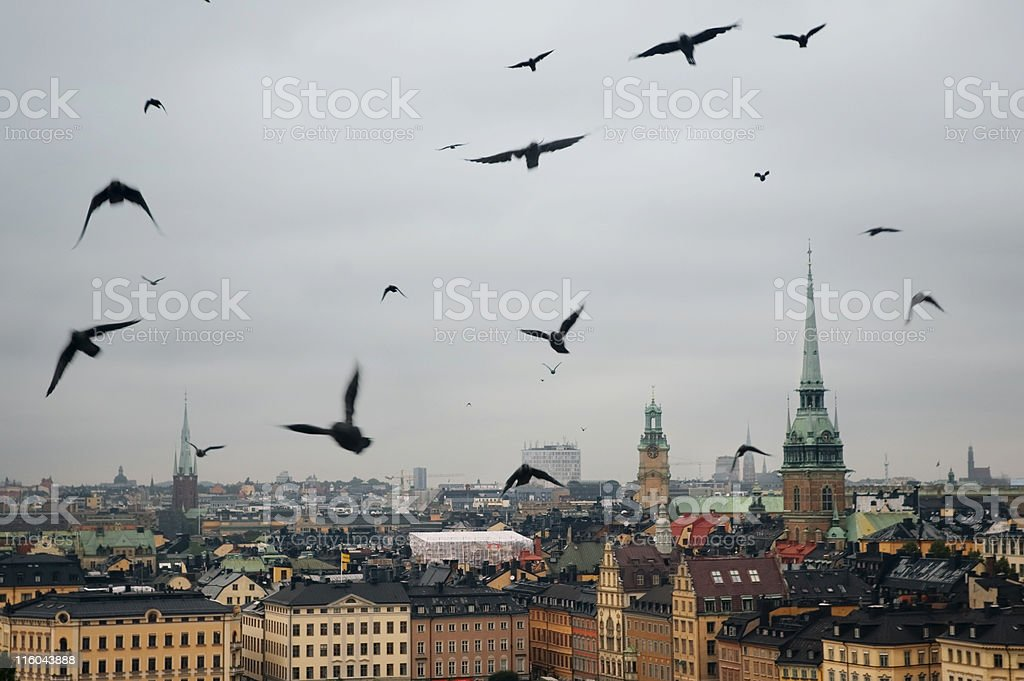 crows royalty-free stock photo