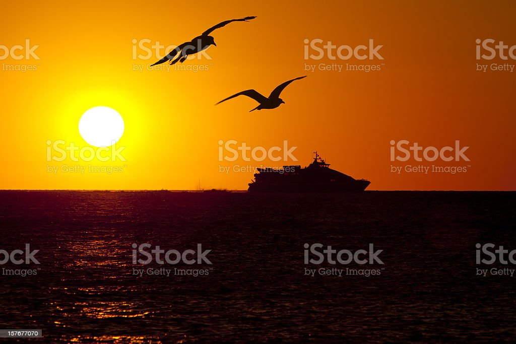 Cruise ship against sun during the sunset with flying seagulls royalty-free stock photo