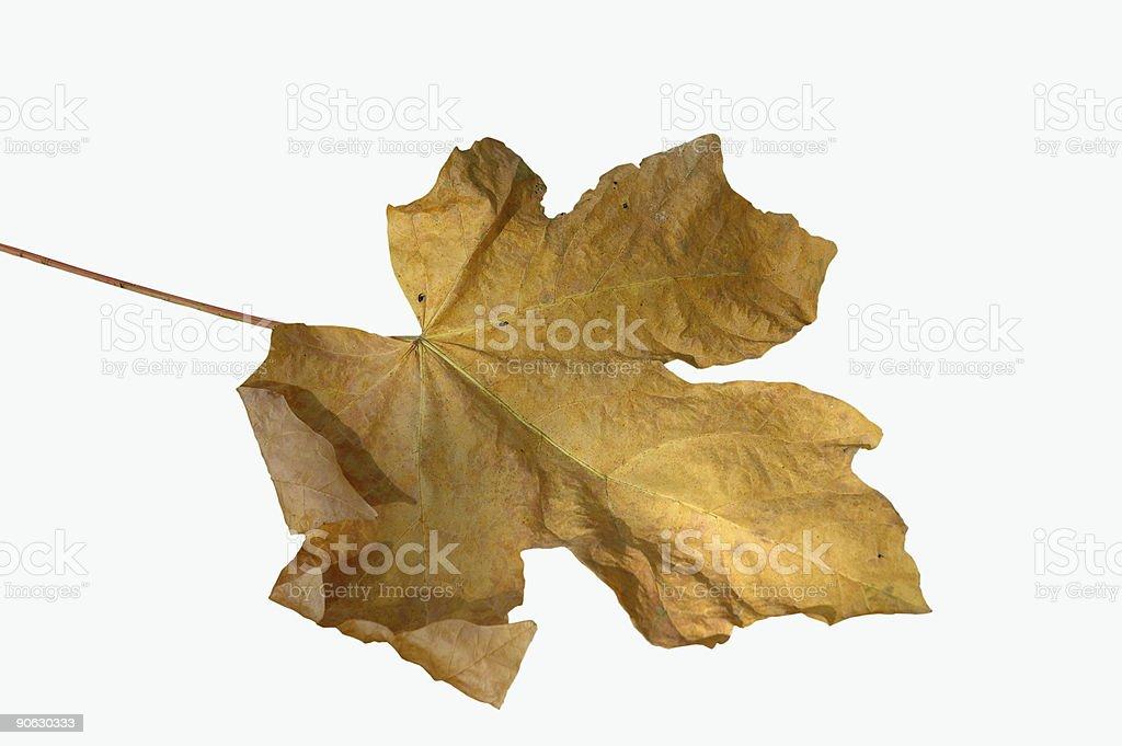 Crumpled leaf royalty-free stock photo