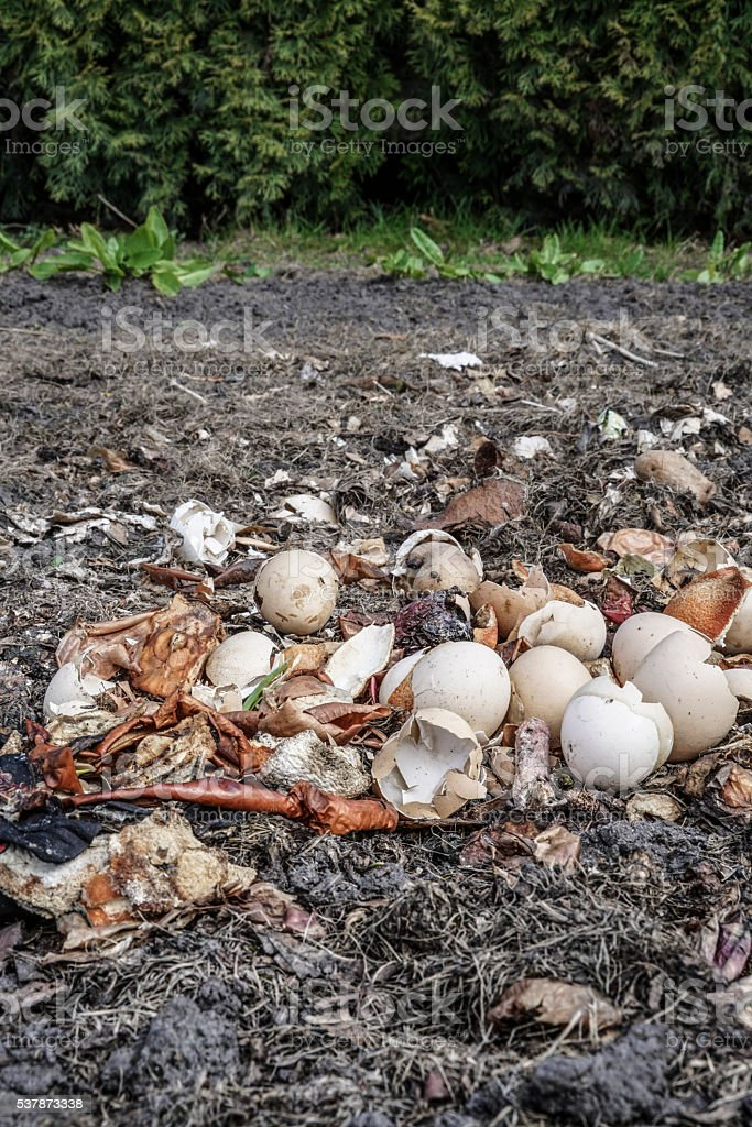 Crushed egg shells recycled as natural organic garden fertilizer stock photo