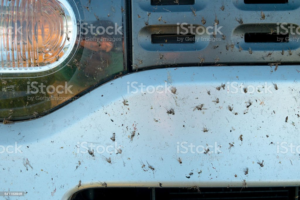 Crushed insect on car bumper. stock photo