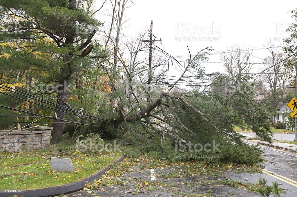 Crushed power line caused by fallen tree during Hurricane stock photo