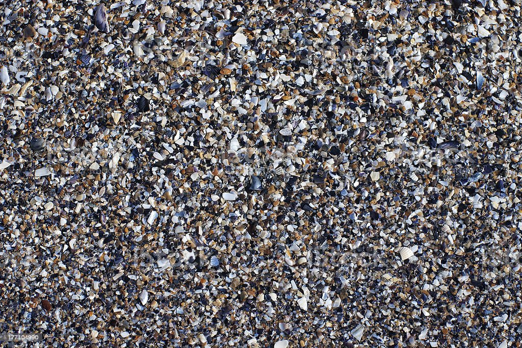 crushed seashells background stock photo