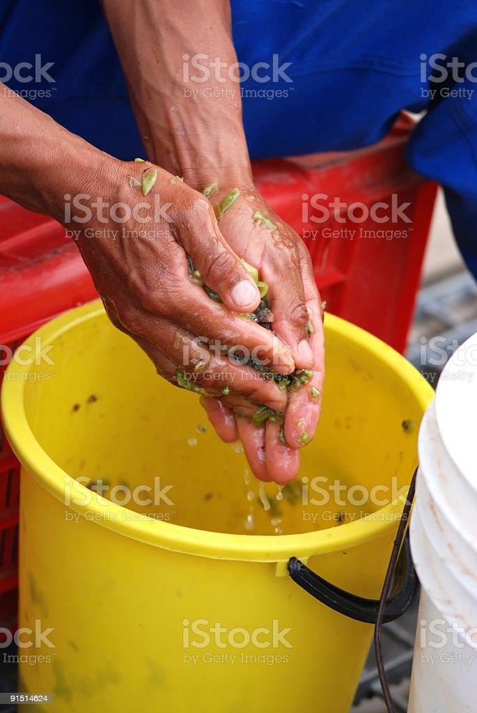 Crushing Hands stock photo