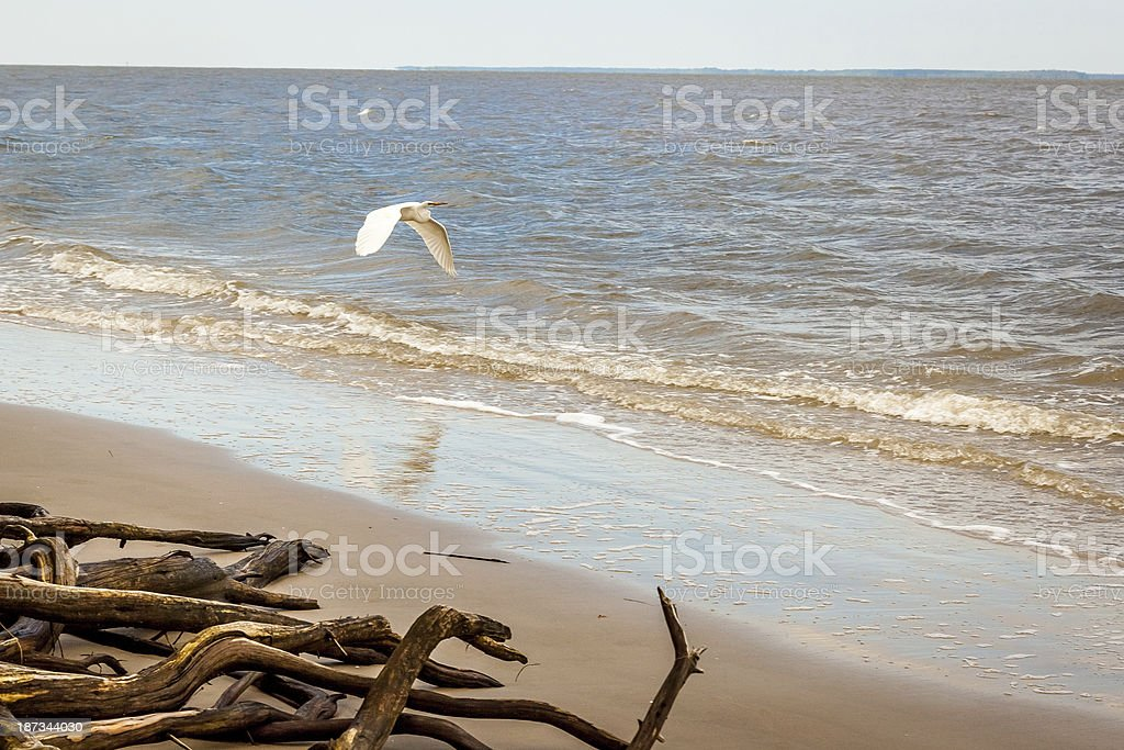 Cruz'in the Beach royalty-free stock photo
