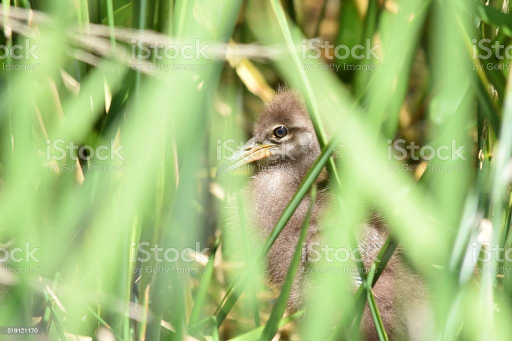 Crying Bird Nest and Chick stock photo