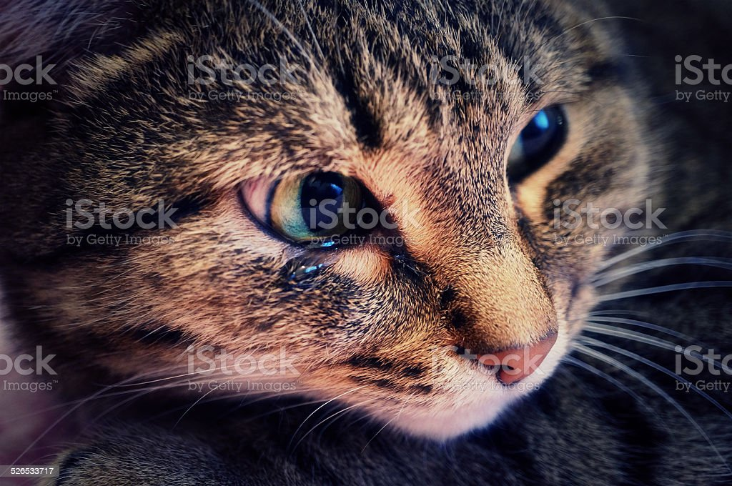 Crying cat stock photo