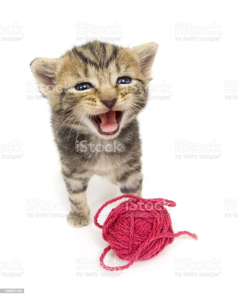 Crying kitten on white background royalty-free stock photo