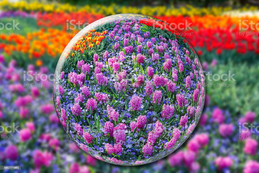 Crystal ball with pink hyacinths and flowers field stock photo