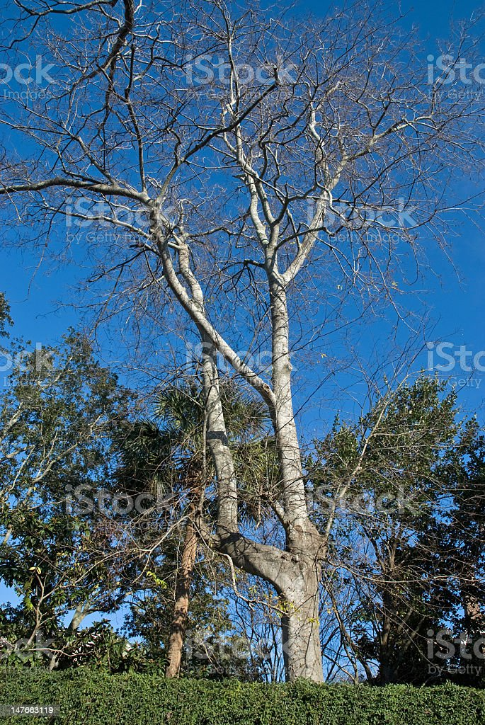 Crystal Clear Winter Day royalty-free stock photo