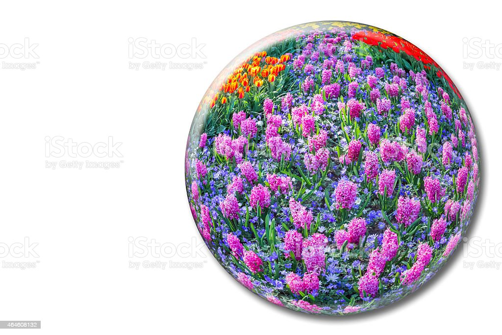 Crystal sphere with pink hyacinths on white background stock photo