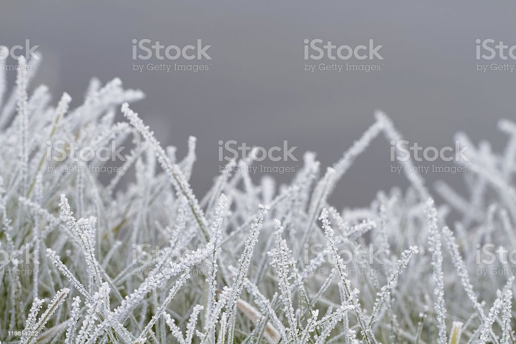 Crystals of frost. royalty-free stock photo