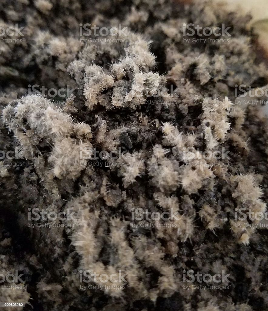 Crystals on coffee stock photo