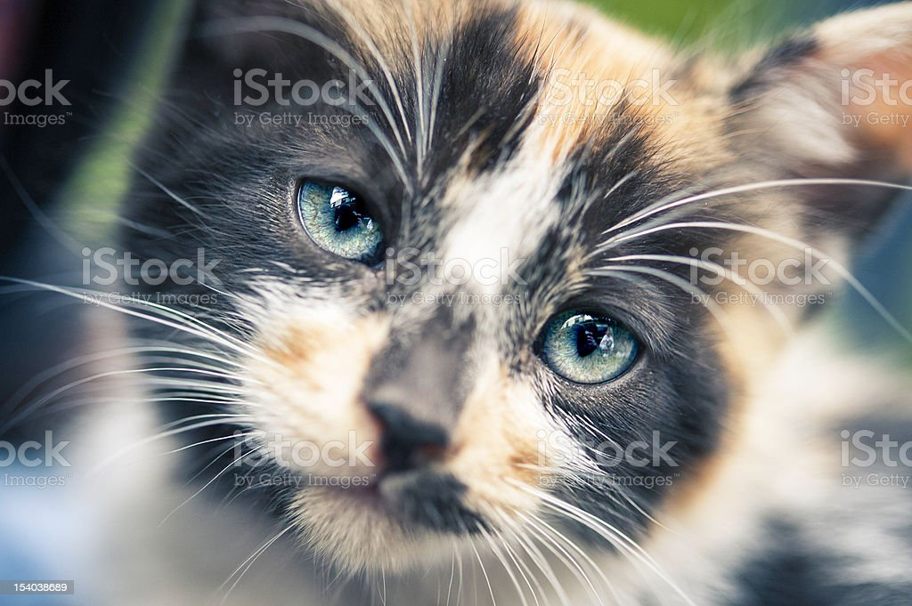 Cub cat portrait royalty-free stock photo