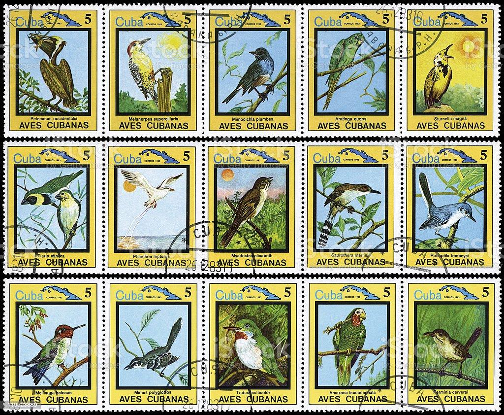 Cuban Birds stock photo