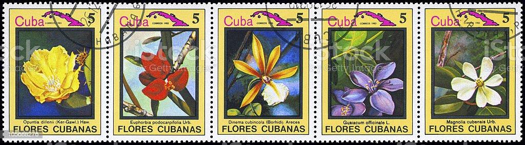 Cuban flowers royalty-free stock photo