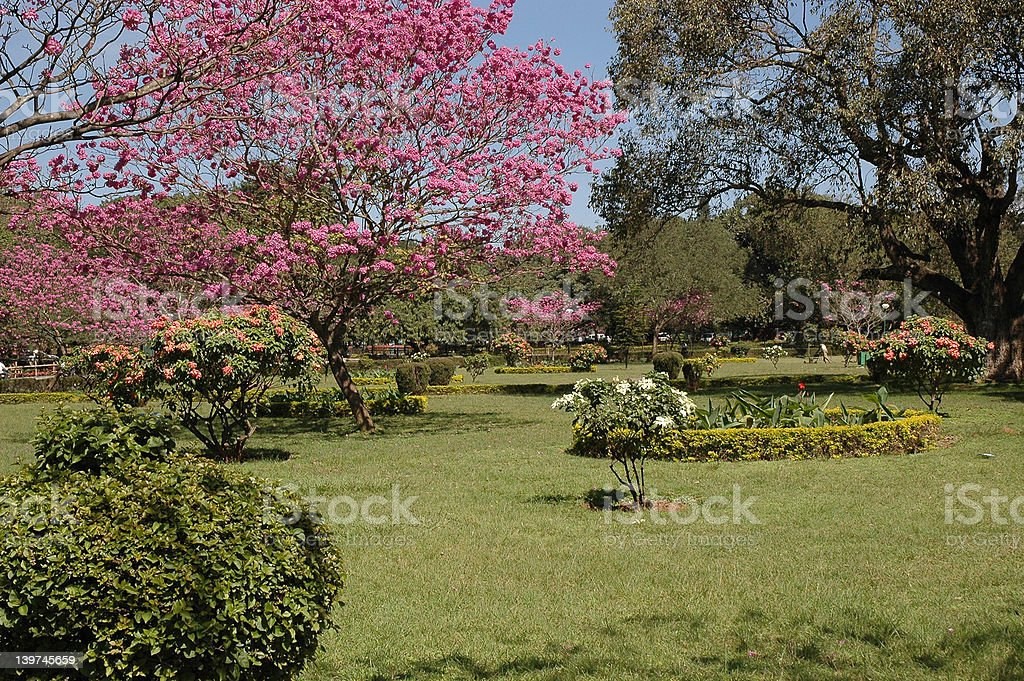 cubbon park, bangalore stock photo
